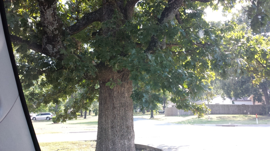 A - Z Tree